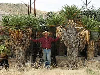 West Texas Plants